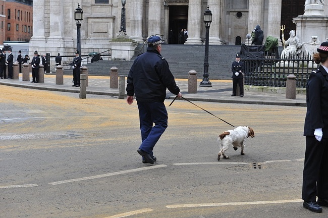 1024px-Thatchers_funeral_Police_sniffer_dogs_doing_security_checks.jpg