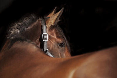 Hair testing detects steroids in 60% of horses at major race